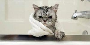cat-scratch.jpg