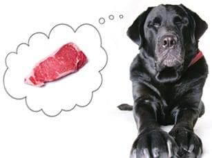 Healthy-Dog