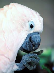Misconceptions About Parrots