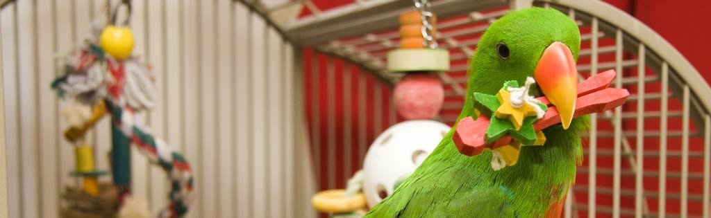 Household perils to your parrot