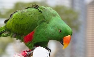 Potty Training Parrot