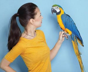 Pet Parrot Not For Everyone article