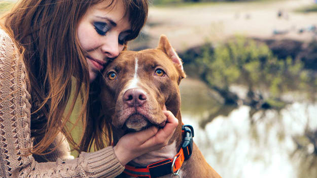 Dog and owners heart rates synch