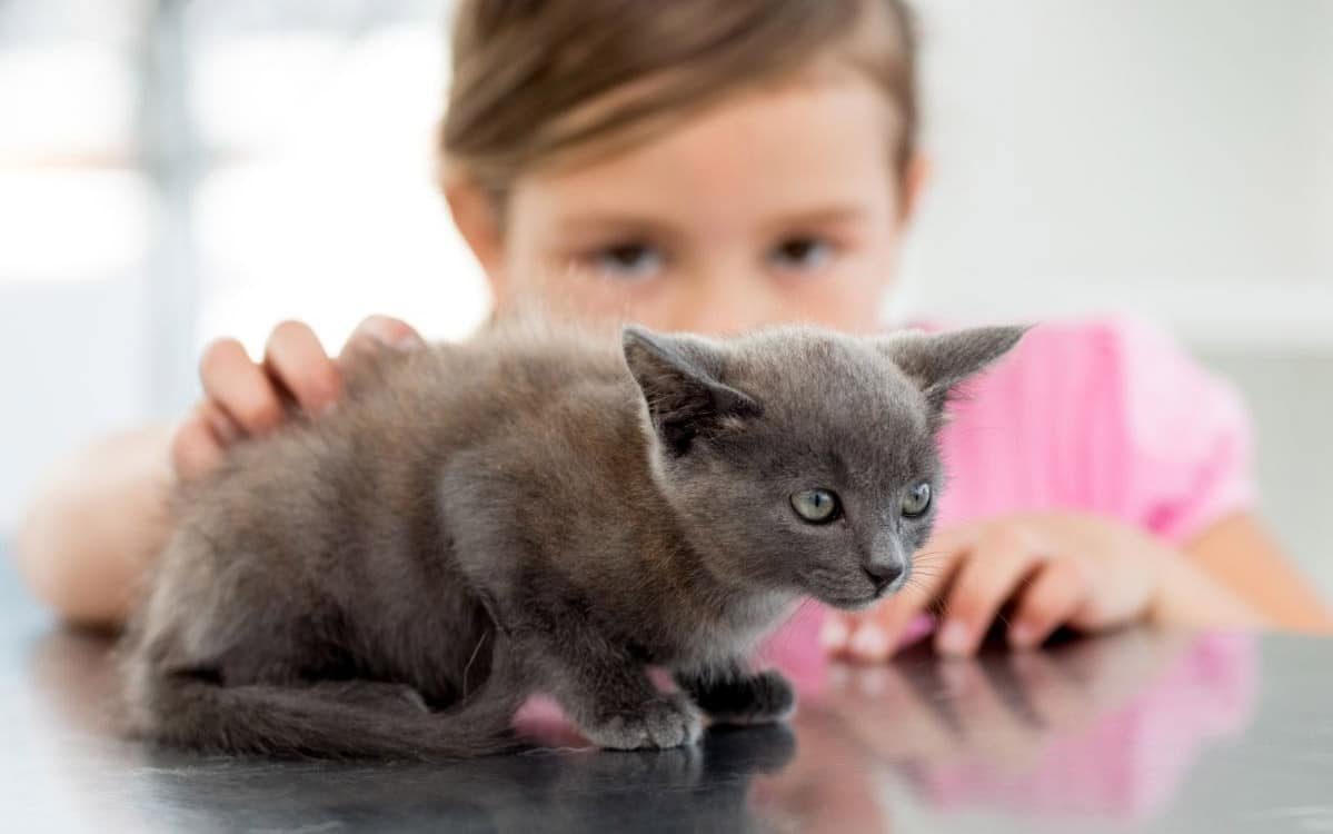 Ten Scientific Benefits of Being a Cat Owner Article