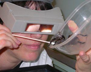 Dr Rolfe Tarantula