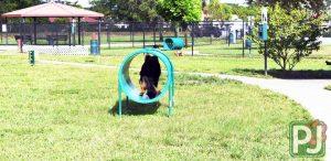 Gary B Jones Large Dog Park 3