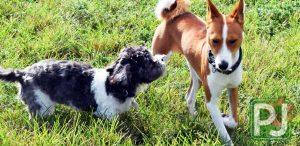 Gary B Jones Small Dog Park 10