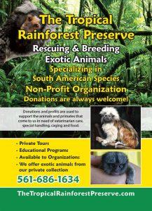 Tropical-Rain-Forest-ad