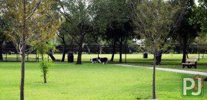 Wellington Dog Park Large Dog 8