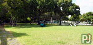 Woodville Dog Park Large Dog 2