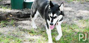 Woodville Dog Park Large Dog 5