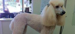 head to tail grooming slide 2