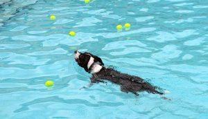 Soggy Doggy Swim 9