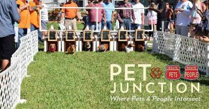 Pet Junction Facebook Doxie dash