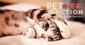Pet Junction social cat