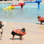 Waggin at the Waterpark 2