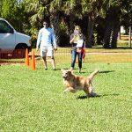 Paws in the Park, Jupiter Florida 2