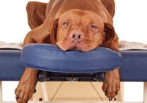 Benefits of canine massage Home page preview 3