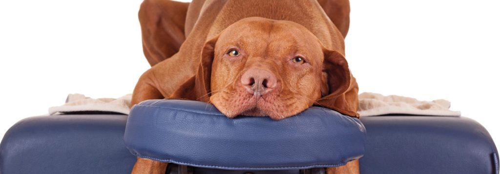 Canine Massage 2