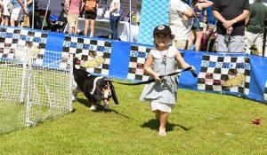 Doggy Fun fest 1