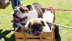 Doggy Fun fest 11