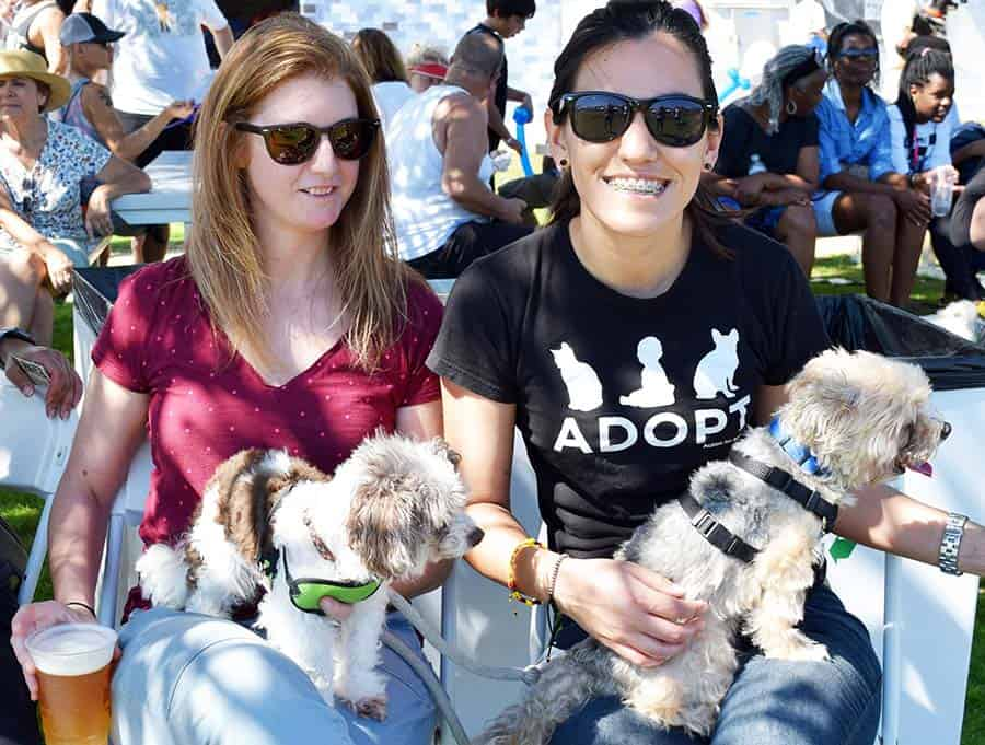 Doggy Fun fest 14