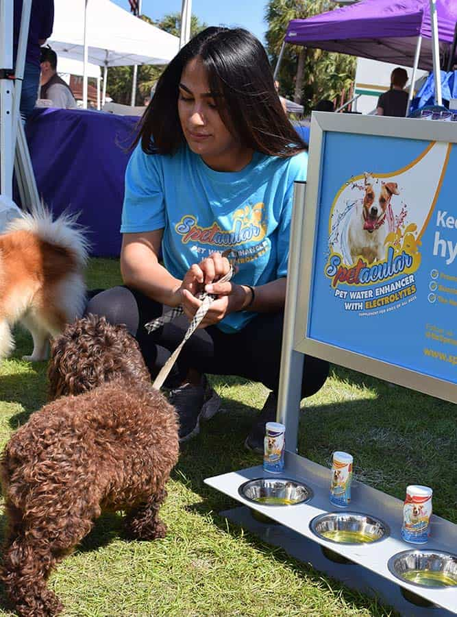 Doggy Fun fest 2