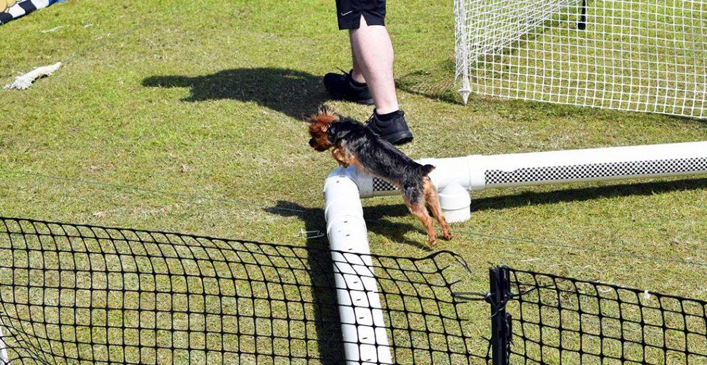 Doggy Fun fest 26