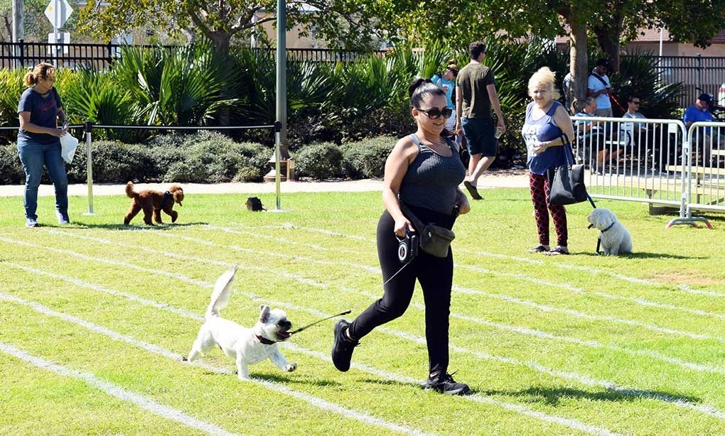 Doggy Fun fest 35