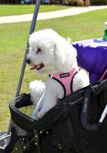 Doggy Fun fest 4