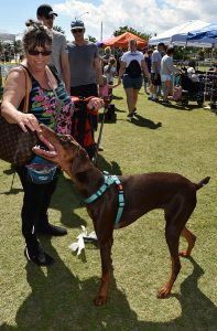 Doggy Fun fest 6