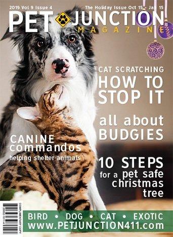 Pet Junction October Cover 2019