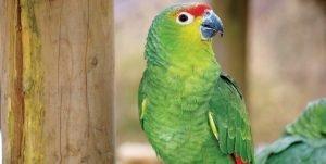 Bird Nutrition, Getting It Right, FI