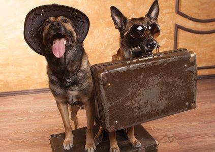 Need dog boarding HP