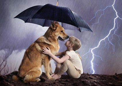 Protect Your Pets in the Event of a Hurricane