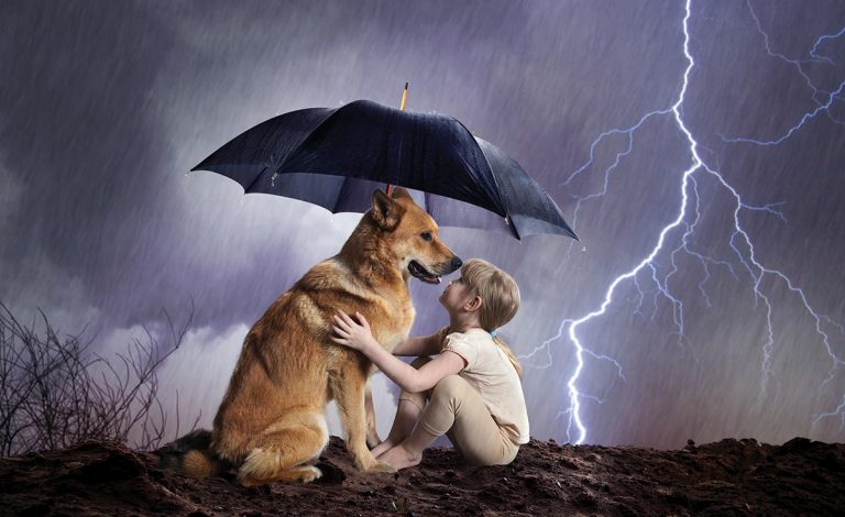 Protecting Your Pets In A Hurricane Florida
