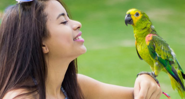 Amazon parrot with girl article