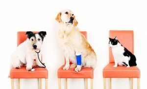 Top Animal Hospitals in Fort Lauderdale, FL