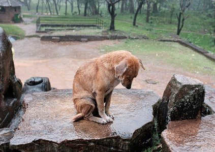 Dog sitting on rock in rain hp