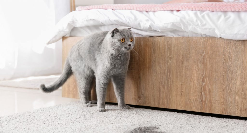 cat pee on rug