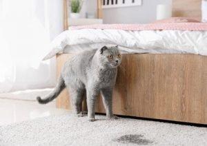 cat pee on rug hp