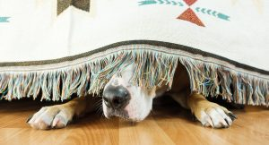 thunderstorm fear in dogs
