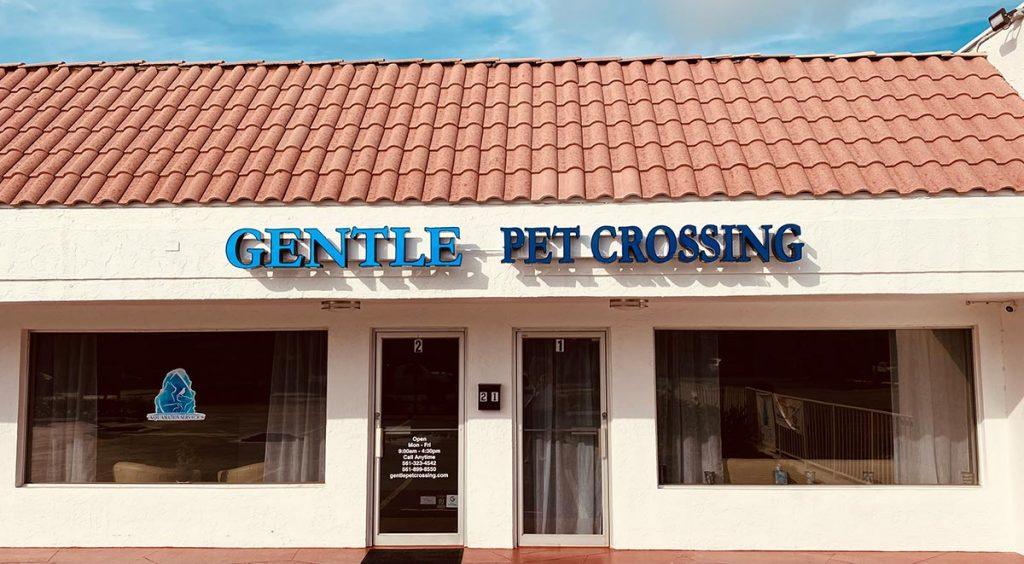 gentle pet crossing outside