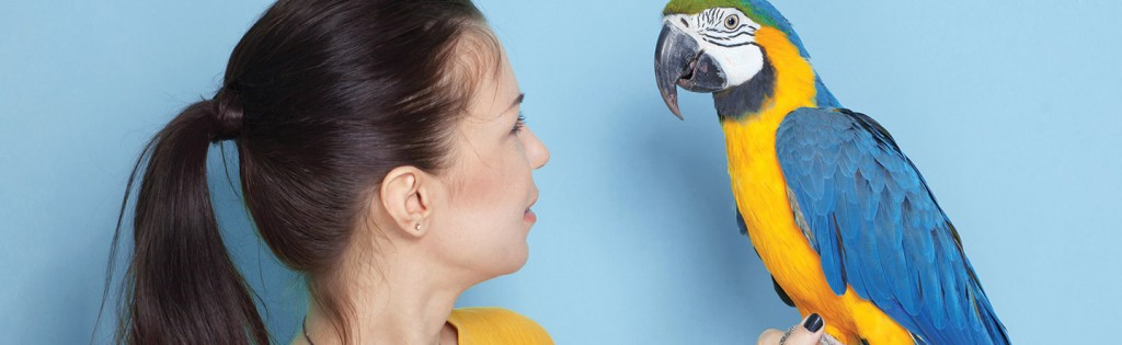 Pet Parrot Not For Everyone